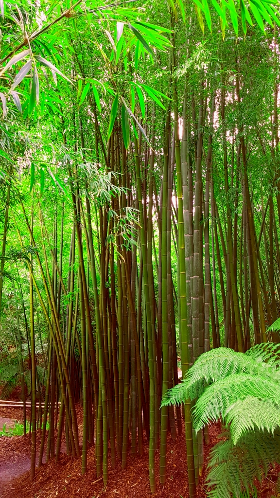 Bamboo and Ferns