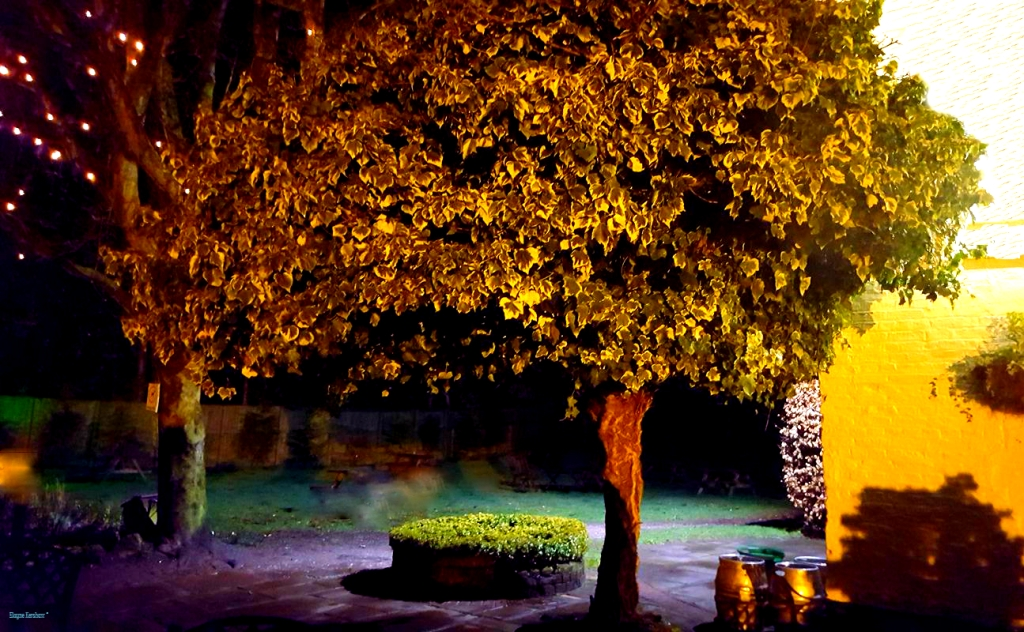 Swettenham Tree