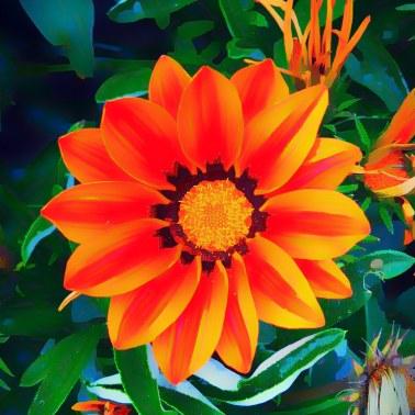 Orange Flower, Falmouth