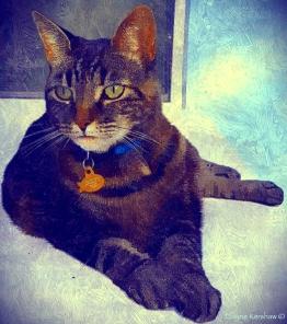 Floridian Cat