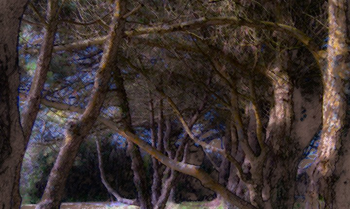 Trees at Prussia Cove
